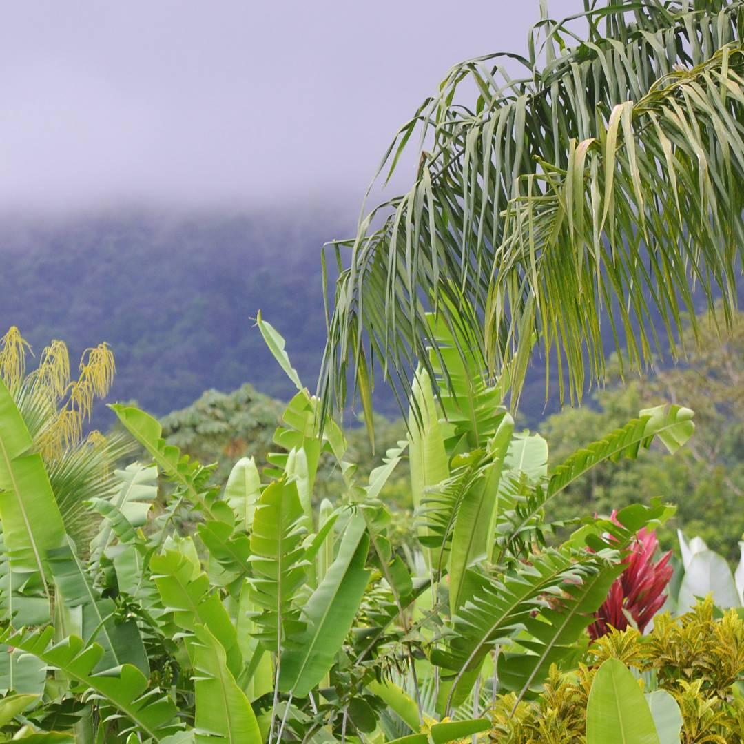 Y si... esi es de hermosa es la naturaleza. Una combinacion de colores. Aunque lamentablemente nunca pude apreciar el volcan arenal. Las nubes fueron un clasico del paisajes.  #descubrecostarica #costarica #arenal #volcan #selva #verde #tropical #d3100...