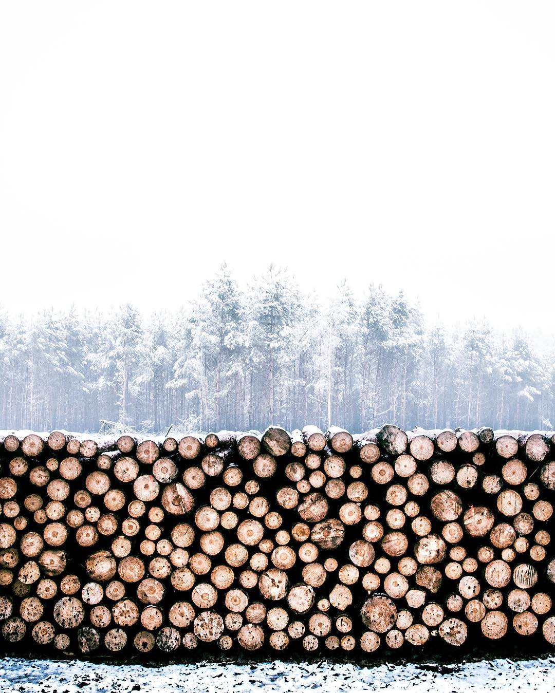 How many trees can you fit into one photo? Take a guess. #NatureOfProof