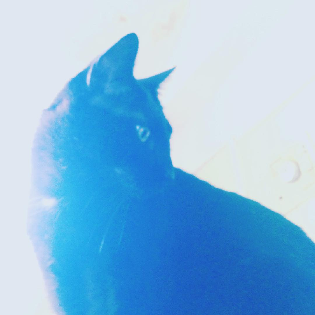 Estoy azulado #sodastereo #catlovers