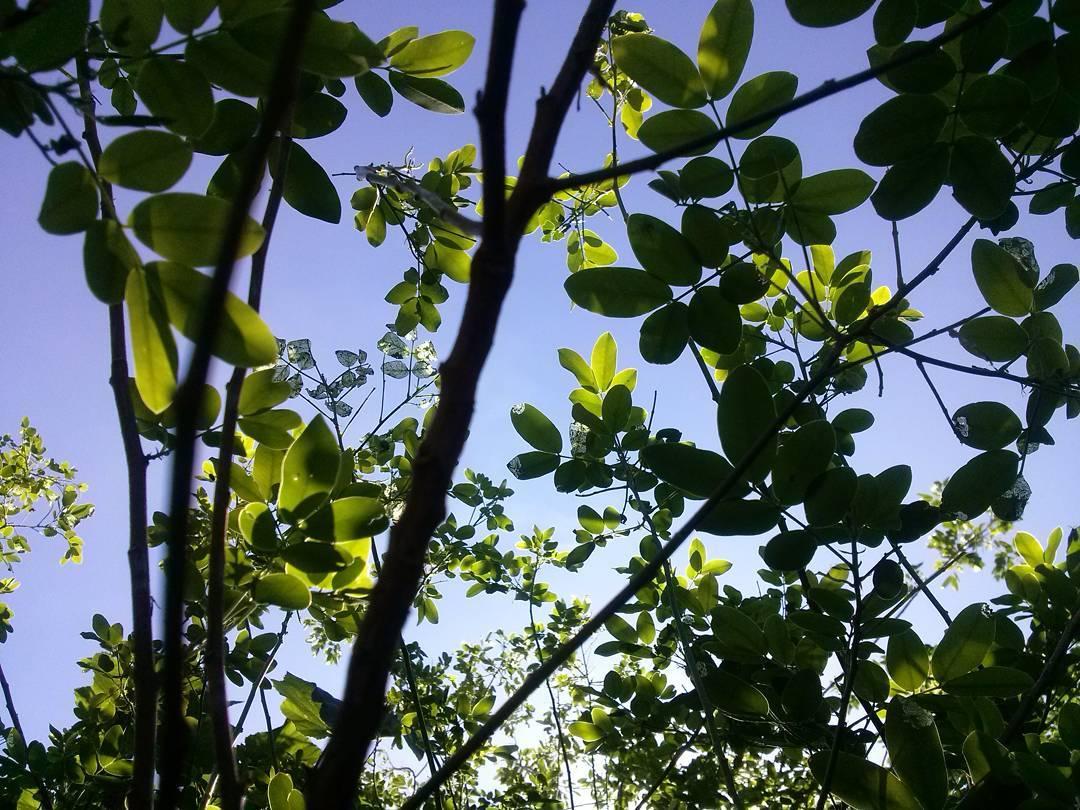 Desayunar con té verde entre verde. #buendia #buongiorno #goodmorning #green #peaceathome #goodlife #29defebrero #instamorning #natural#garden