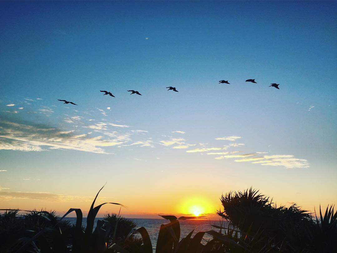 Pelicans know what's up! Sunrise fly by #sunrise #sunrisechaser #Tulum #Mexico #girlstrip #wanderlust