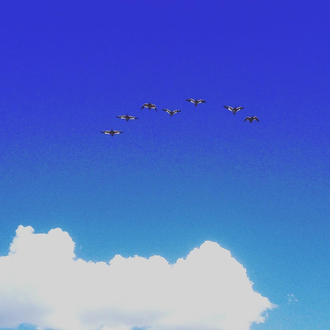 Patos #Bariloche #argentina #patos #sky #cielo