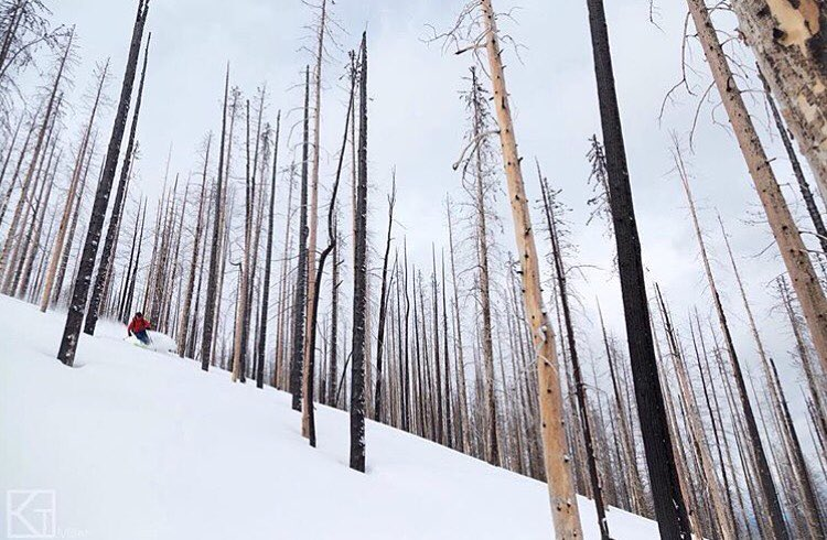 @davidpowdersteele skiing through scorched forest above @downingmountainlodge.