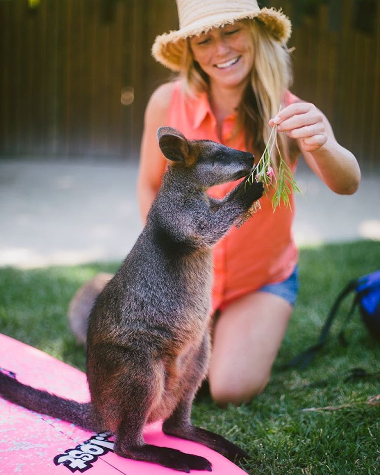 "Taking a break from the @ausopenofsurf I got to hang out this fluffy and friendly Wallaby who was orphaned when his mom got hit by a car. Thanks the @tarongazoo education learning center, ""Alkira"" now has a home along with the many other orphaned..."