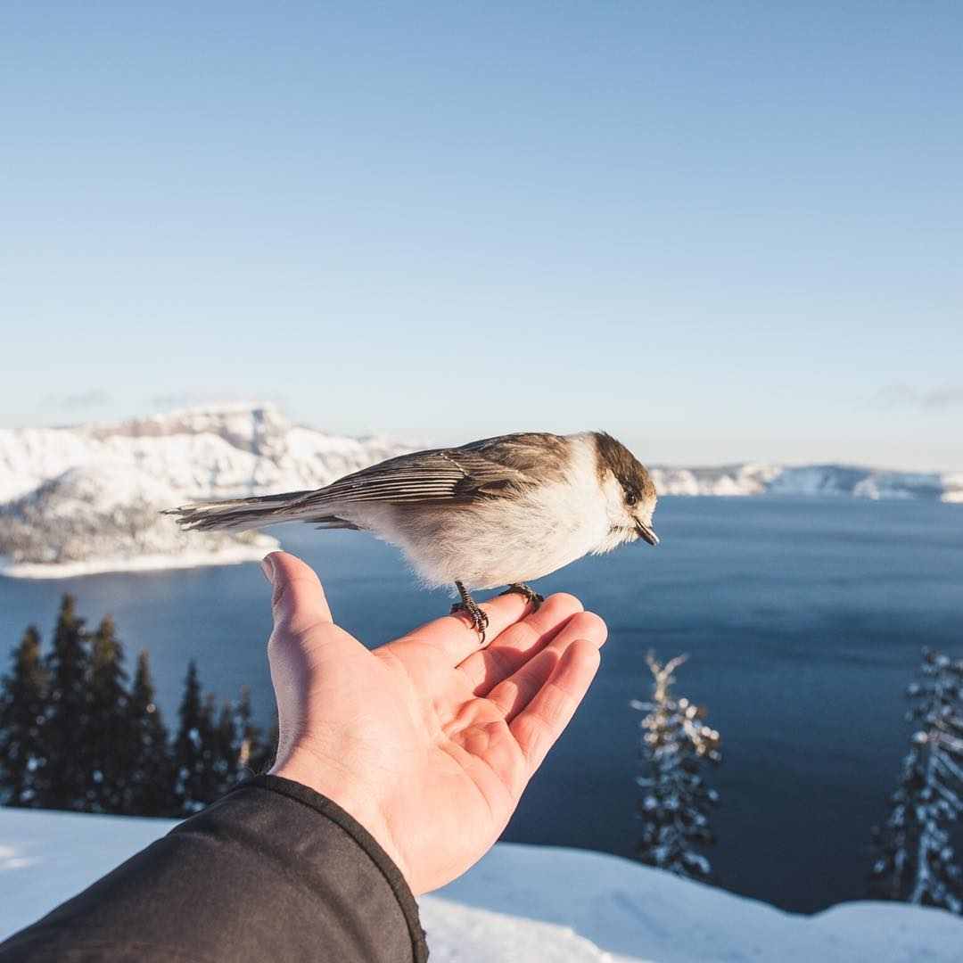 @temporaryeternal is a bird whisperer  Find the full #ProofFrontierProject on the blog, link in bio
