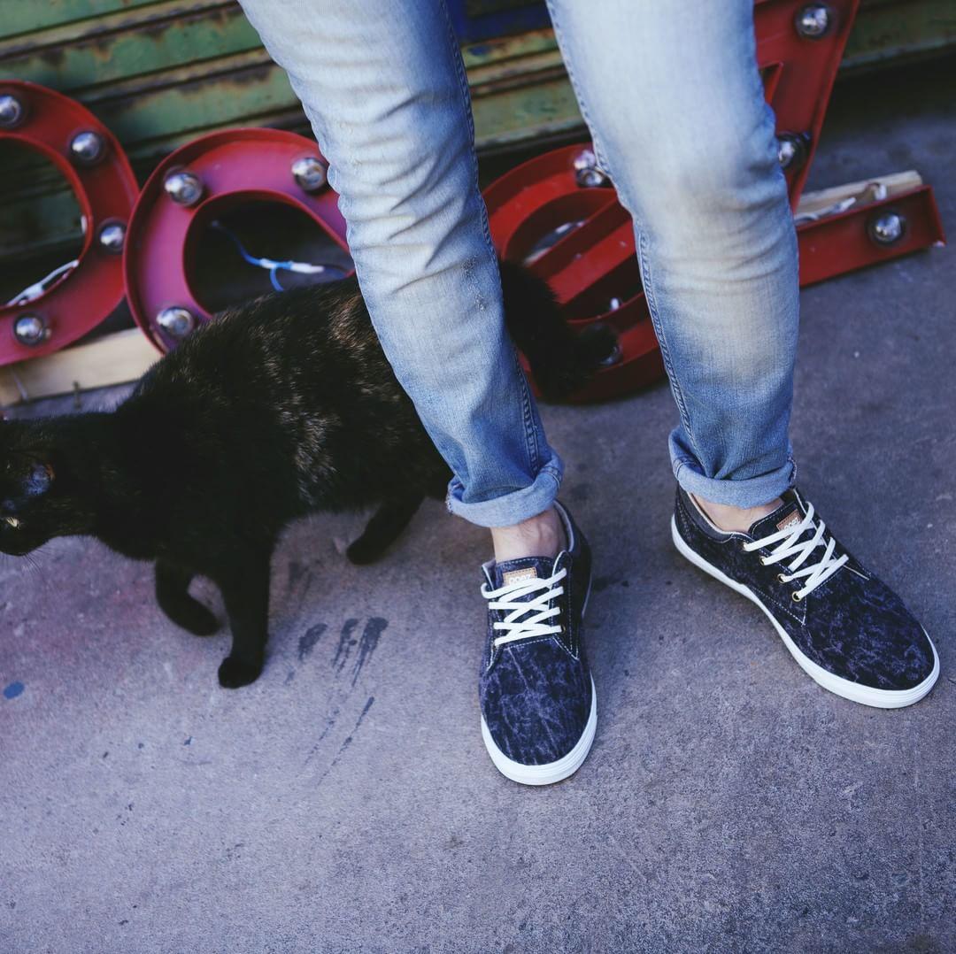 Sneakers para sacar a pasear al gato