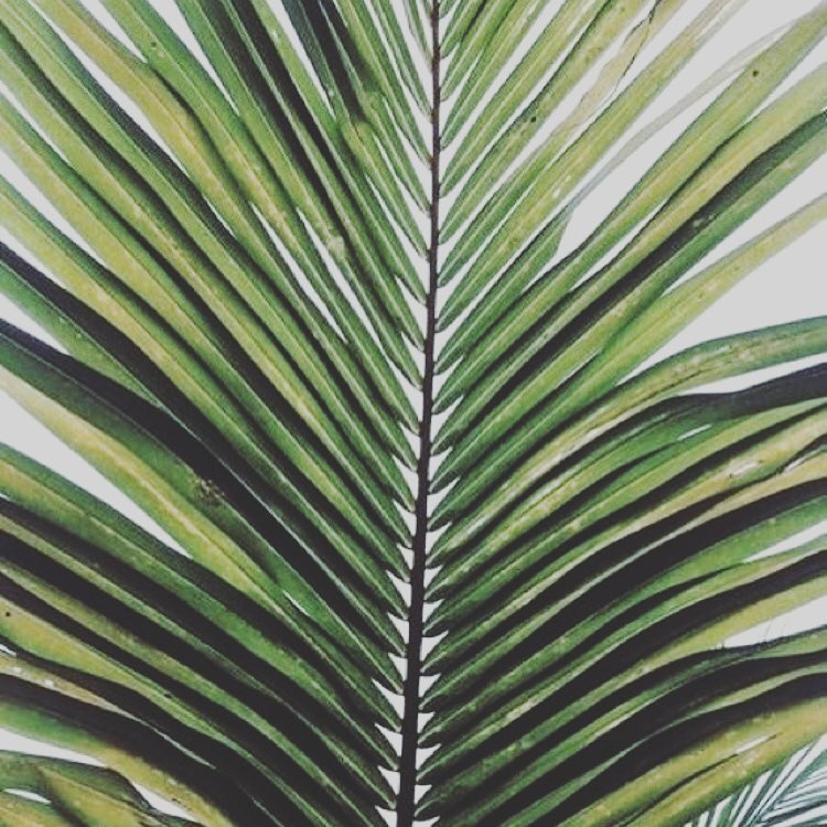 Still in love with palms. A bright, easy way to freshen up your space...or your wardrobe.  #sporty #fresh #palm #palmfrond #islandvibes