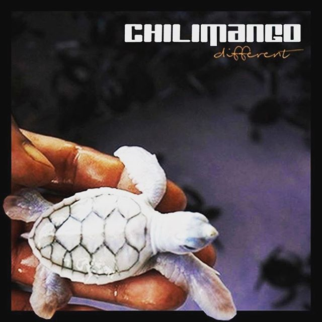 #chilimango #diseño #design #different #surf #surfers #surfer #surfing #surfgirl #surfstyle #moda #thinkpositive #thinkdifferent #thinkdifferently