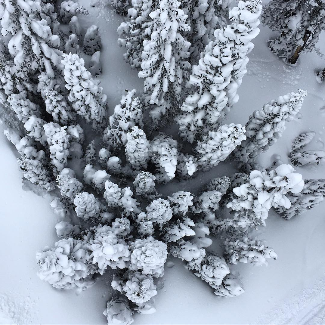 the soul poles crew went storm chasing and squaw valley delivered the goods! 4+ feet of pow! //#soulfulsituations #newperspectives