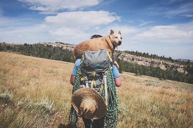 Everyone have their climbing buddy? Check. @john.nolen certainly has his. #MHMgear #PacksElevated #dogsinbackpacks