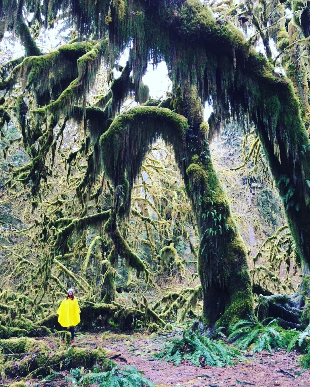 R A I N / F O R E S T Weekend trippin w/ @lizzonya @thefriendlybeard #radparks shot in from @olympicnationalpark ~ soaking in the magical wonderland. #vanlife #nationalpark