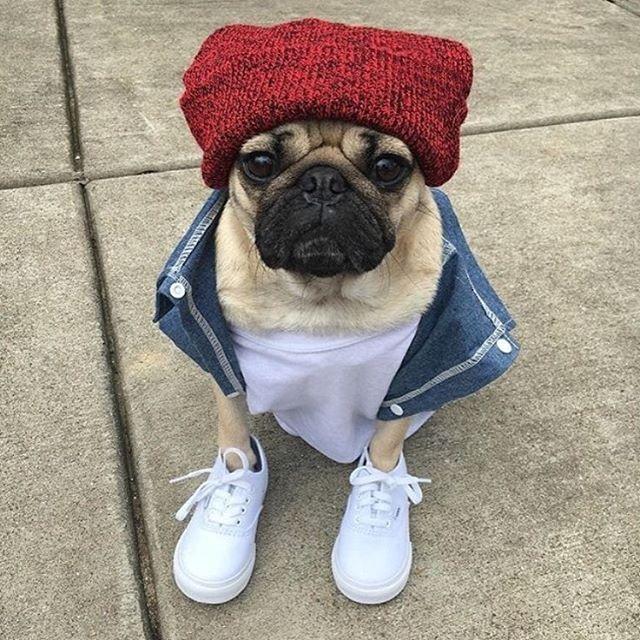 Pug life ✌