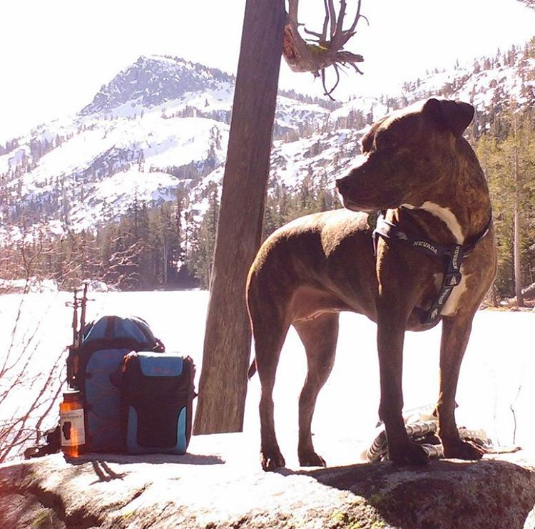 What are your plans on this Selection Sunday?  Hope you're able to #getoutside for a few hours! #marchmadness #whatsyour20 #backpacks #coolers #hike #snowshoe #graniterocx #tahoesnaps #tahoesouth #outdoorsrocx