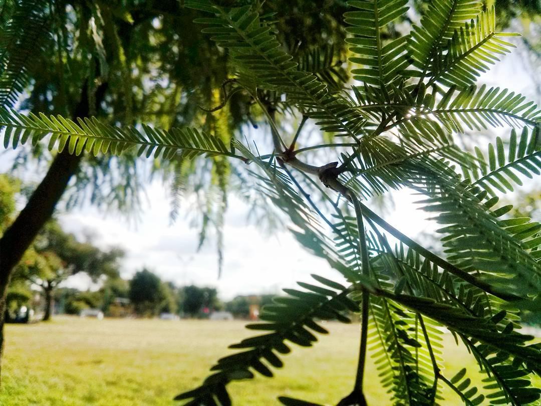 Encontrar la paz en cualquier lugar. #temperley #finky #ph #nature #detail #instanature #loveit