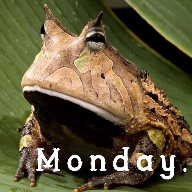 4 more days till COACHELLA, anyone going? #cuipo #saverainforest #monday
