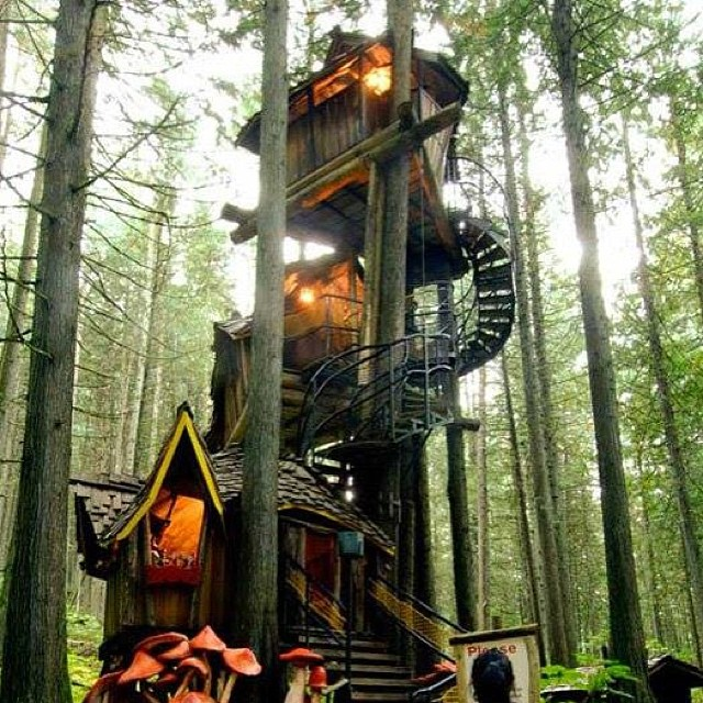 #TreeHouse Thursdays. Wouldn't mind unplugging here for a few days. Deep in the woods. #Nature #GetOutside #TreeFort