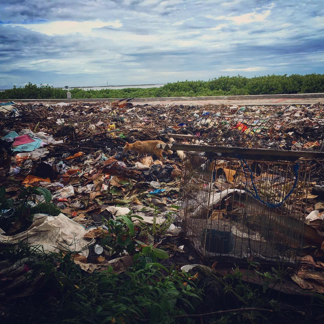 Virtually every piece of plastic that was ever made still exists in some shape or form... 50% of all the plastic consumed in the world is used only once and then thrown away. Here even in a marine protected area in the Java Sea, plastic waste washes...