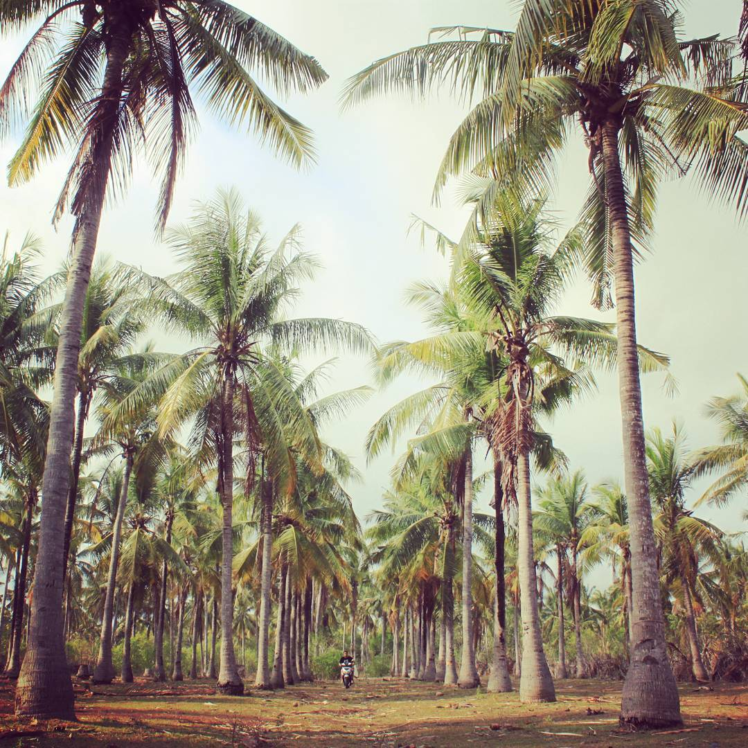 Al sur de la Isla de Lombok, Indonesia, existe un lugar llamado Kuta. Para quienes han recorrido Bali, Kuta puede sonar a alta concentración de población, negocios, cadenas y mercados de todo tipo. En Lombok, la palabra Kuta toma una completa y nueva...