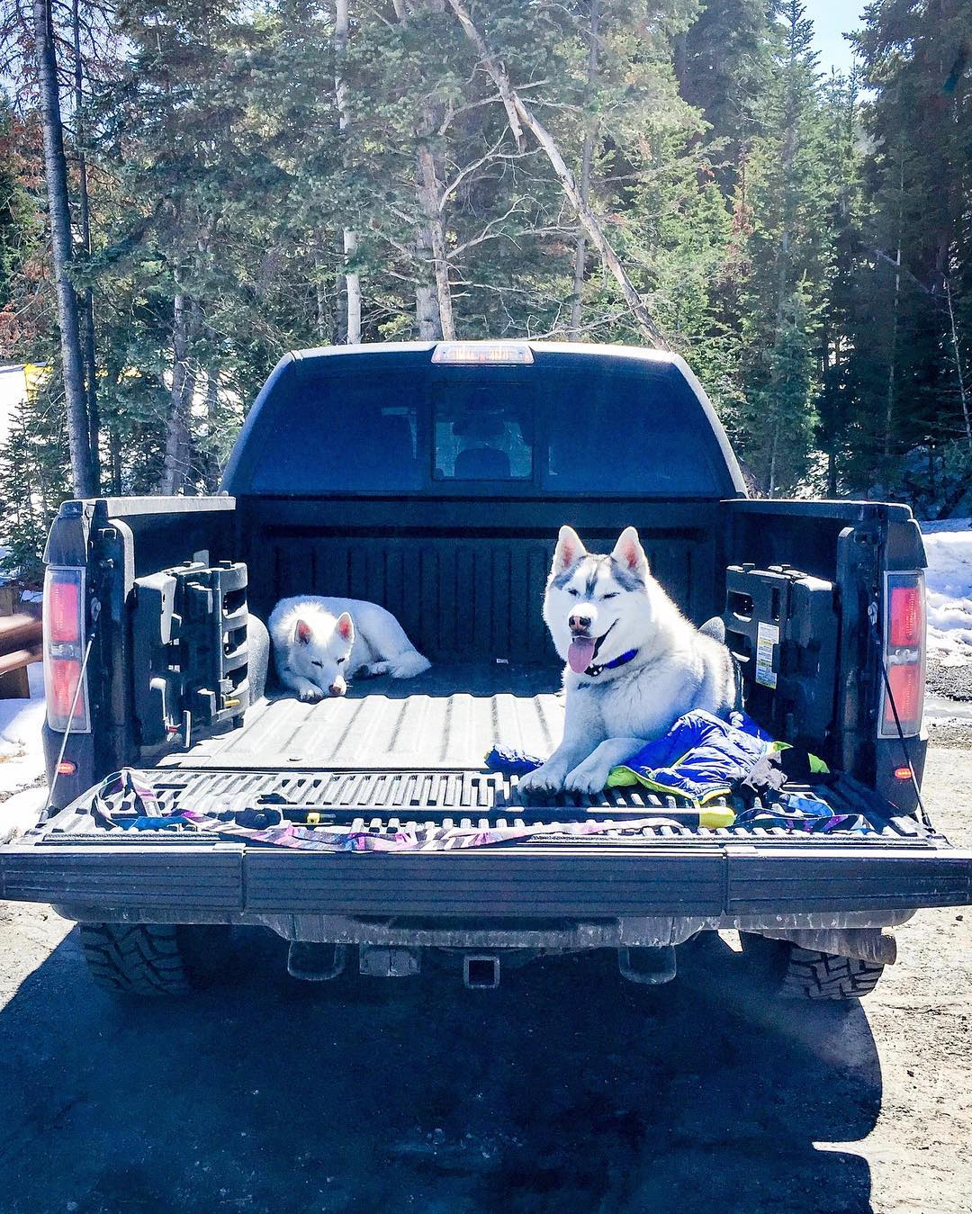 After a long hike yesterday filled with spring snow, exploring, chasing random wildlife, sniffing butts, and play-fighting each other, Bentley and Yuki were toast. That means lounge time in the Raptor bed. #FordRaptor #akadogbed #fureverywhere...