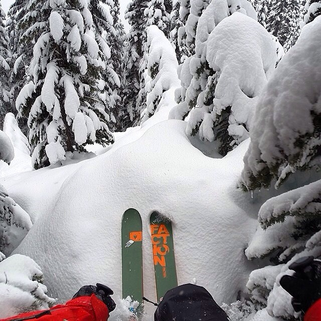 "Fluffy pillows in trees #plantyoursoul by @ronnie00x ""Case of the Mondays! // @ronnie00x ""Case of the Mondays! // @stevenspass"