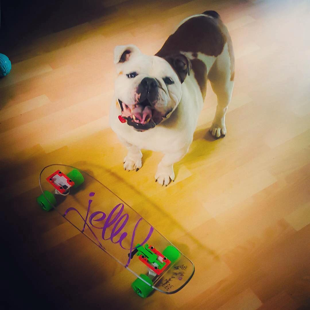 @aeckenwiler pup Ralphie is stoked on his new #jellykingslayer