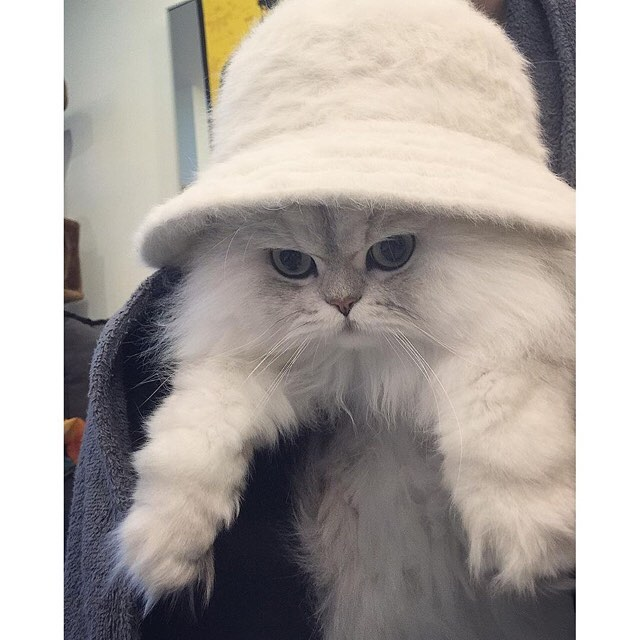 Can I haz the fluffy white one pls? #kangol via @twinkle_twinkle_casper