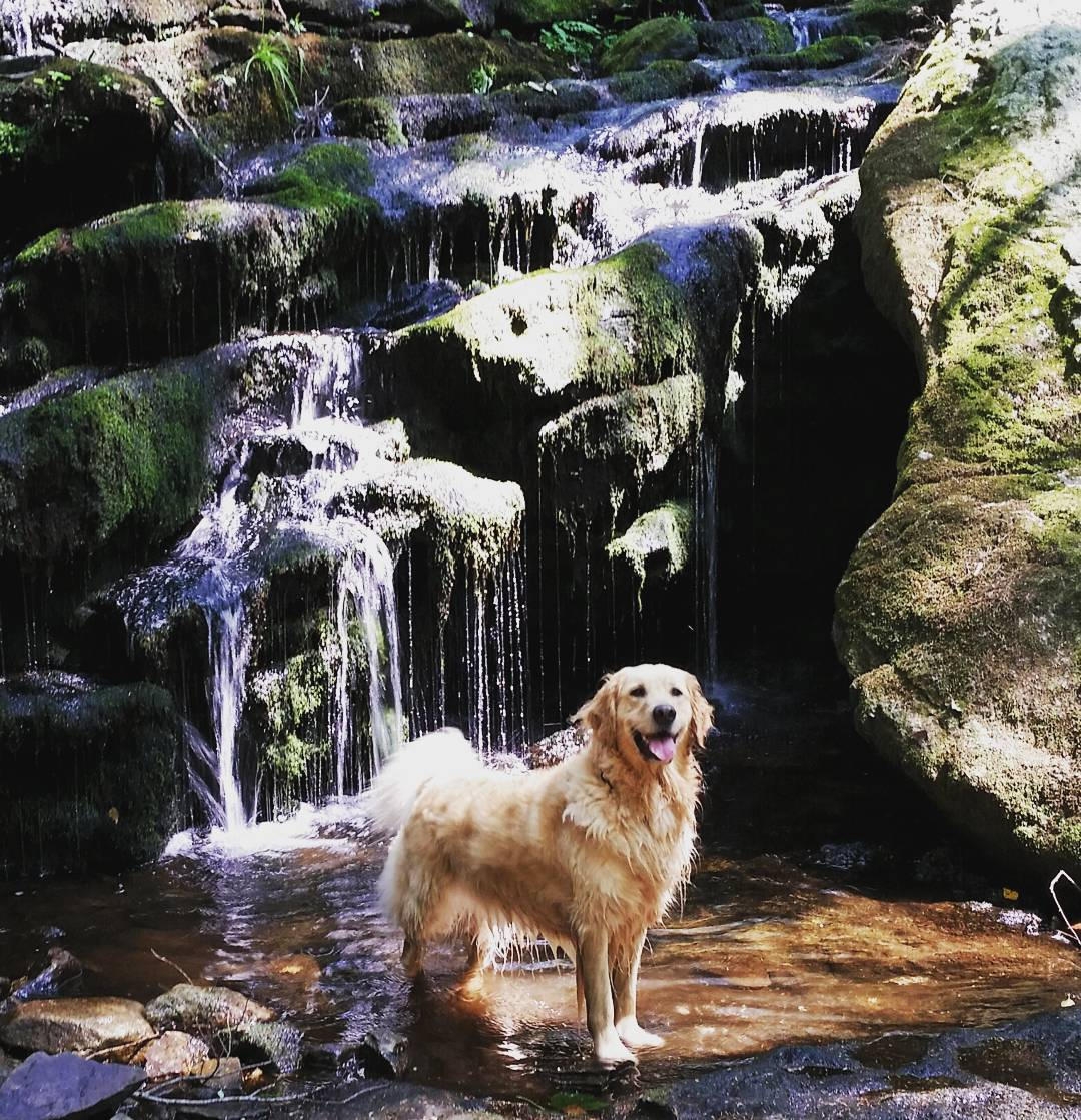 The summer is quickly approaching and the #waterfalls will soon be running strong.  Time to get the pups ready for the #trails!  #getoutside #pups #CT #adventure #graniterocx #outdoorsrocx