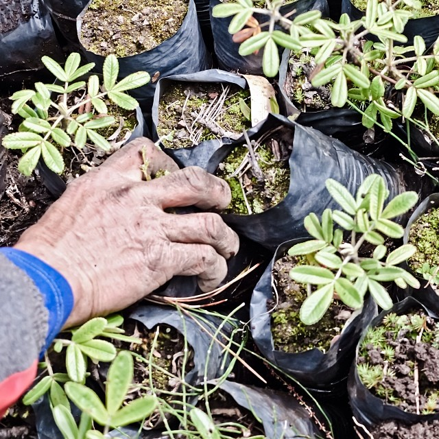 #1percentftp member Amazonas Explorer has teamed up with #nonprofit partner Green Our Planet to plant 250K trees in the Lares region of #Peru this year. We're encouraging our members to support this cause and help reforest this region- $1 plants 1...