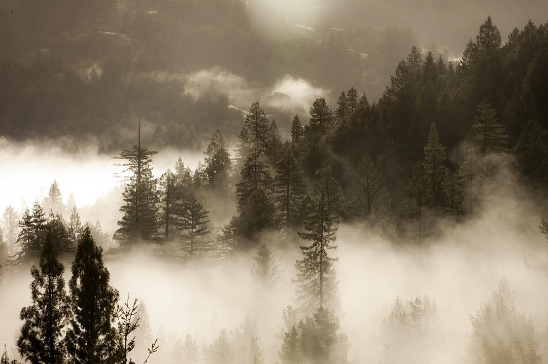 Low clouds rolling in, Cazadero, California.