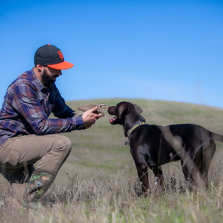 We spent the weekend introducing our pup, Brook Trout, to a whole new world of chasing birds.  It's always good to start with small birds like chukar or quail to ensure your dog has a positive experience. #frenemies #birddog #hunting #wingshooting...