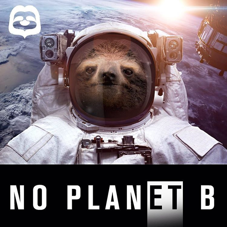 Houston, we have a #deforestation problem. #Cuipo #SaveRainforest #Astrosloth #noPLANetB #EarthMonth #Slothlife #OnePlanet