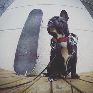 El gran compañero thataluz! #bodyboard #bodyboarding #surf #surfing #leash #s #boards #longboard #sup #wakeboarding #skate #skating #sk8 #vs #morey #boogie #brasil #chile #bulldog #watching #waiting #bestmoment #dog #yoga #dogsofinstagram