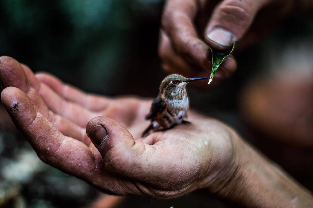 #peakdesignxlumoid 1st Runner Up: This shot by @livinvisions of the hand-feeding of a hummingbird. You win @peakdesign CapturePRO and Shell, plus a Code Black Mini Drone from @lumoidit! Please reach out to us via direct message and provide your contact...