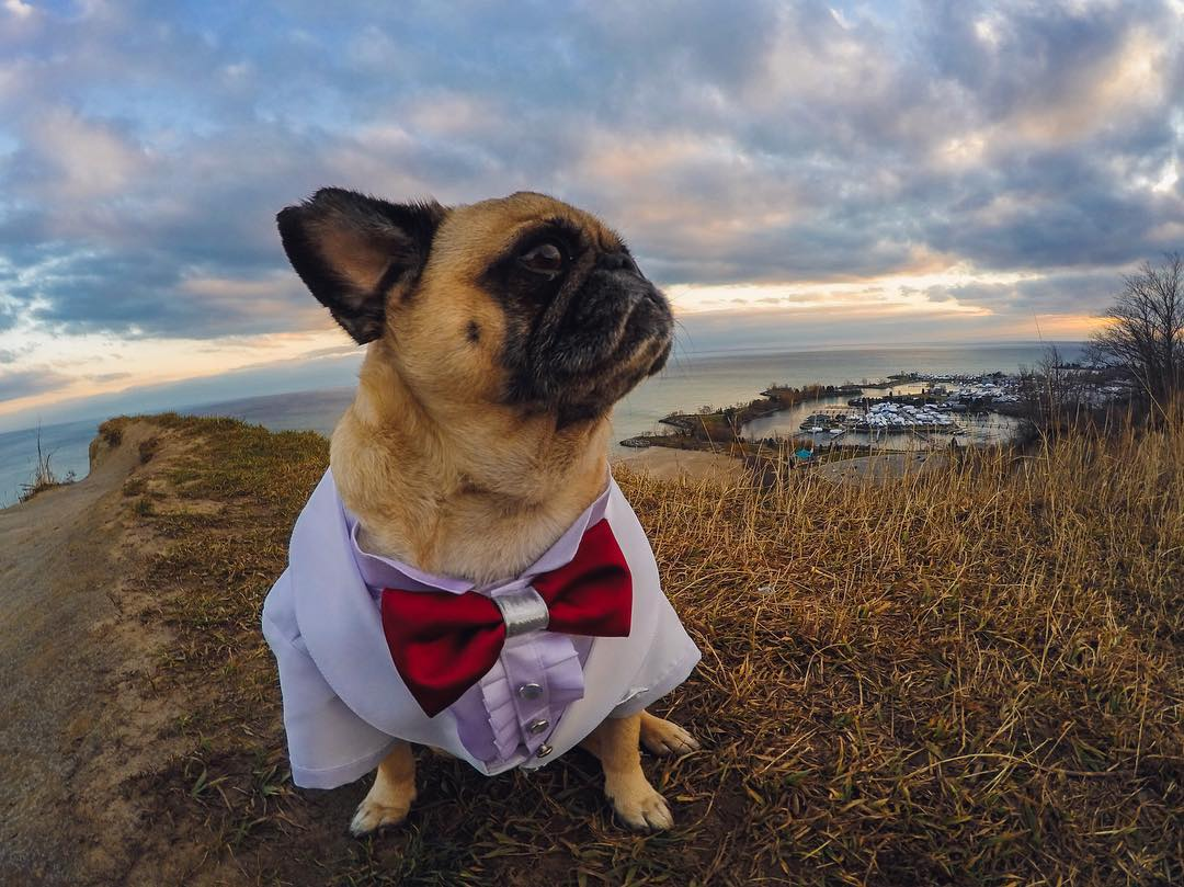 So nice of @atomthepug to dress it up for #NationalPetDay!  For a chance to win a #GoProPet swag bag, check out our contest!  Rules:  1. Submit your best pet photos/videos via link in our bio.  2. Share on your IG or Twitter, using #GoProPet +...