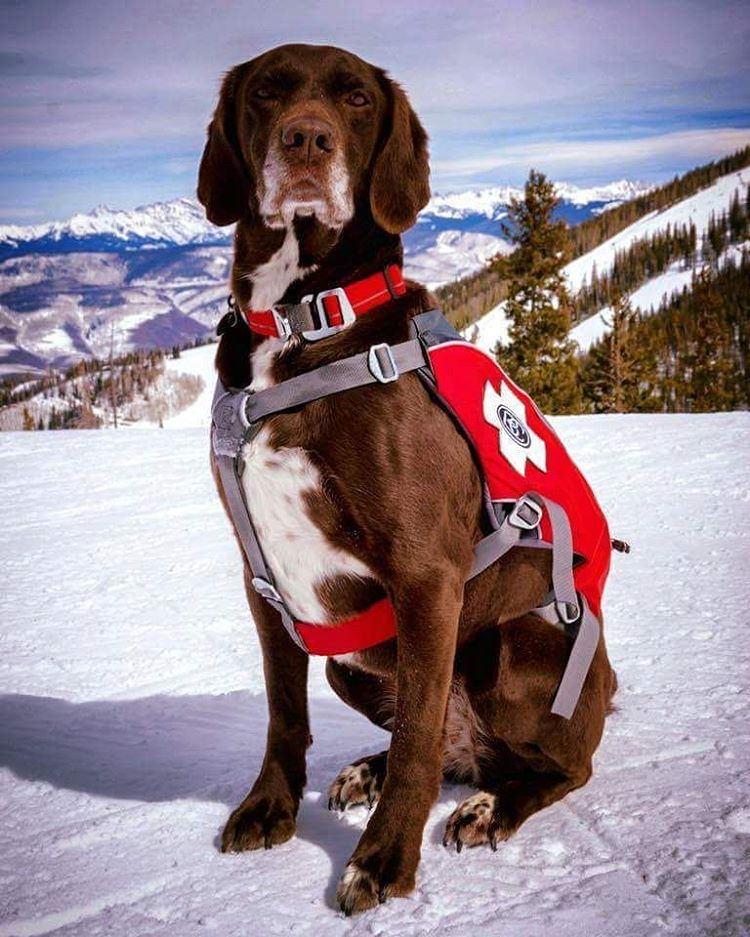 On this #nationalpetday, @sosoutreach would like to thank the @beavercreek #Avalanche Rescue Dogs for keeping us safe this season.