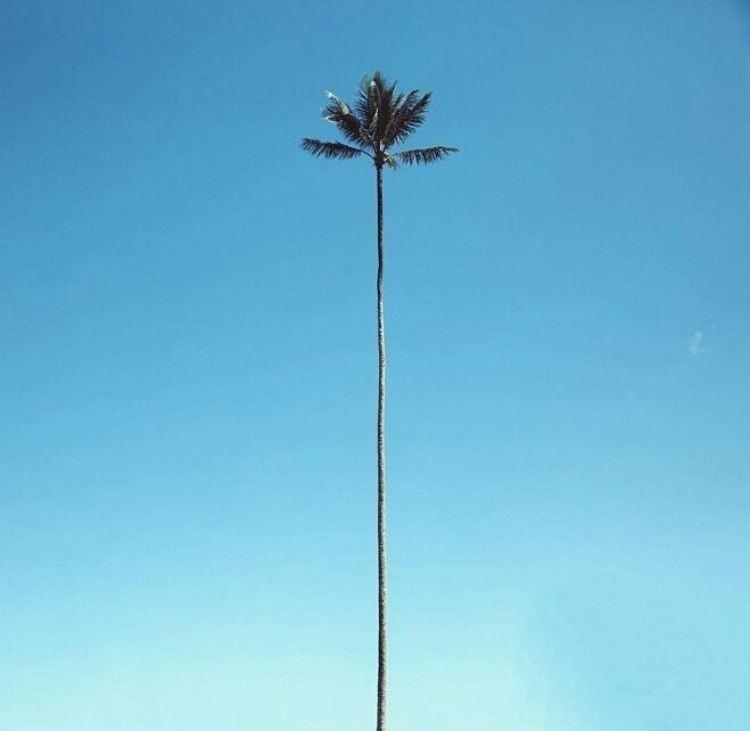 Standing tall…