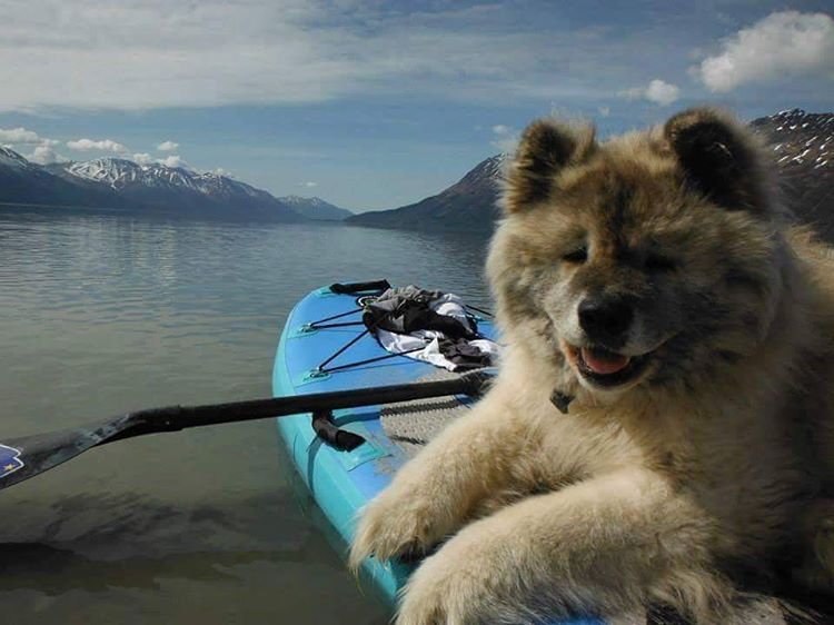 Karlwithak Mittelstadt paddling with his pup on the #halafame in Alaska.  #halagear #adventuredesigned #paddlewithfriends #isup #inflatable #standuppaddle #paddleboarding #suplifestyle #adventurers #sup #supthemag #repostmysup #stand_up_paddle #paddle...