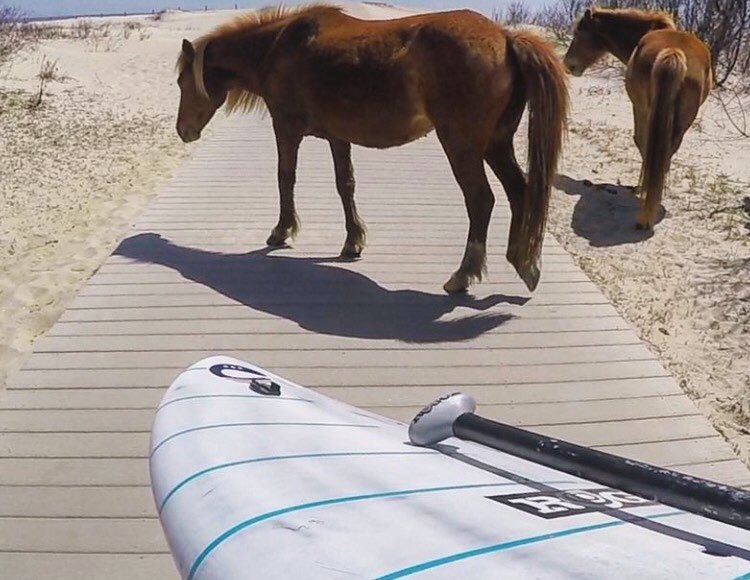 Just horsin around. #roguesup #sup #paddle #standuppaddle