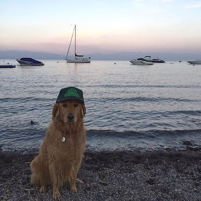 Just stumbled on this shot from @snow_schue . Your dog looks good in the Rise hat! #risedesigns #risedesignstahoe #laketahoe #summervibes