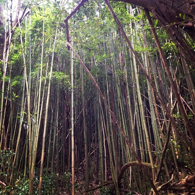 #manoa #nature #hawaii #luckywelivehawaii #dontpancitsorganic #organik by nature