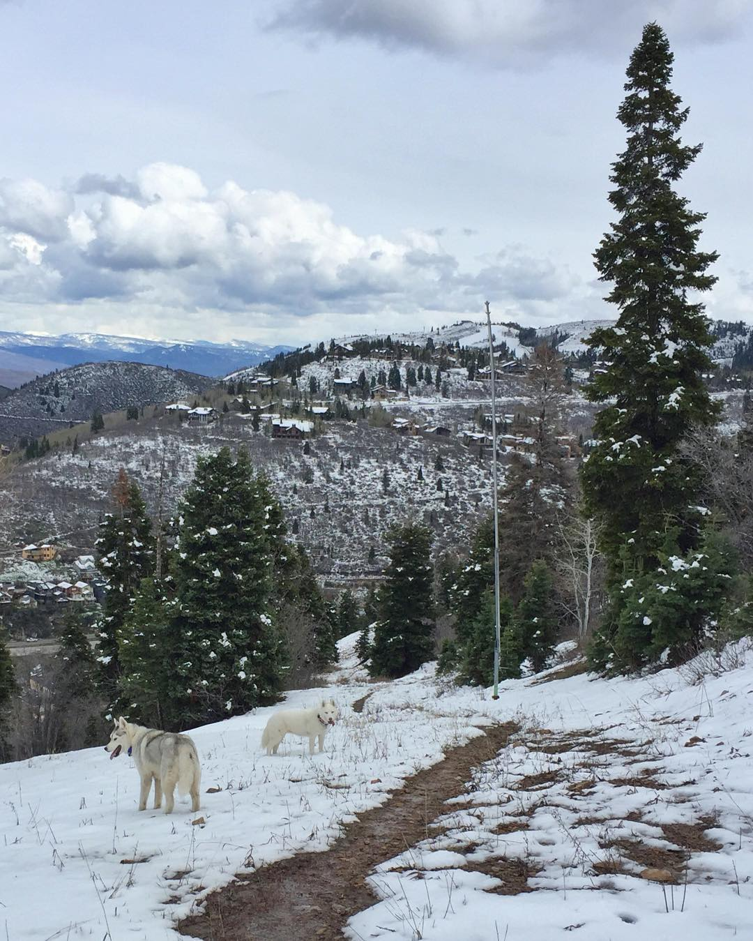 Hiking/training with my fur beasts. Quick shot from yesterday on our hike above downtown #ParkCity. #mountaintownlife #BentleyChickenFingersBlock #YukiTheDestroyer