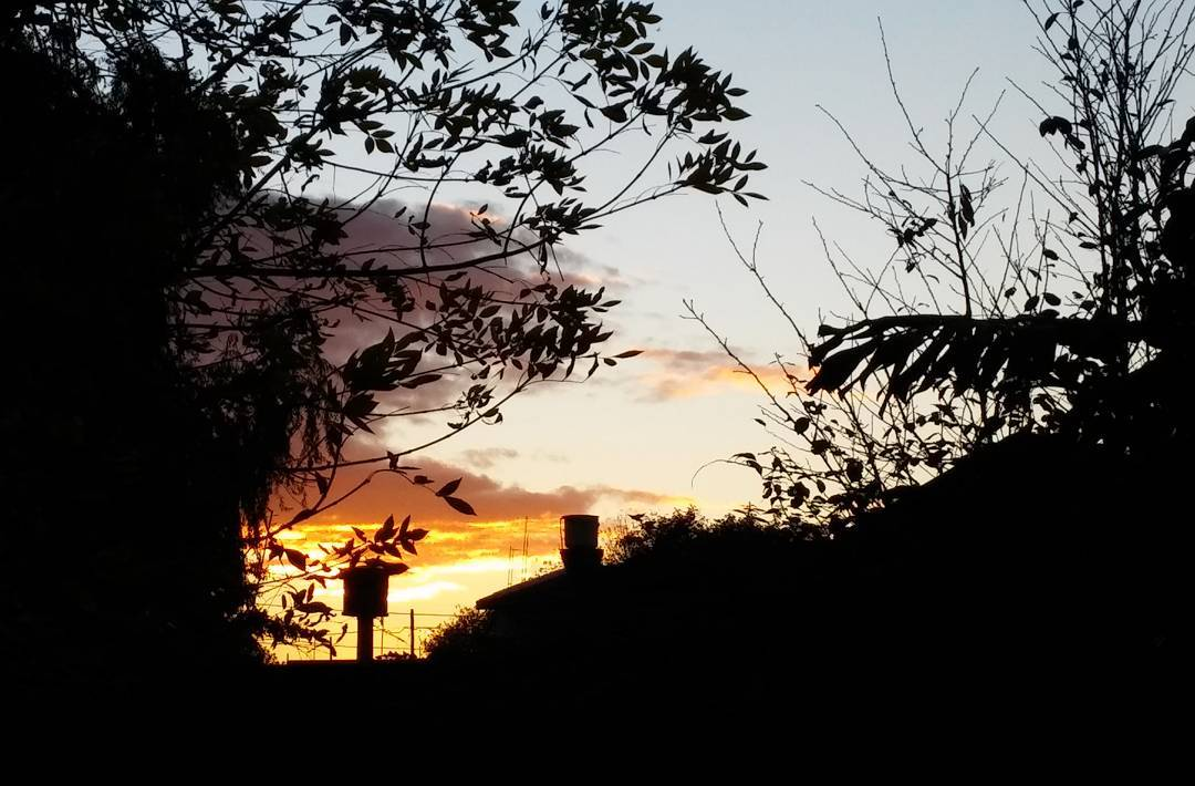 18:11hs. Regalos del otoño. #ph #atardecer #tramonto #sunset #cielo #sky #autumn #otoño #contrast