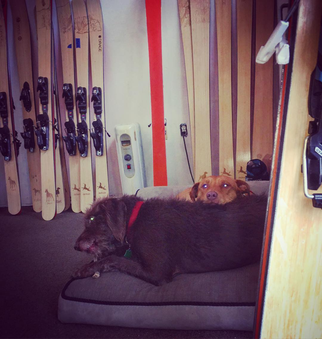 The humans at our new state of the art manufacturing facility aren't the only happy beings up here! Our two headed monster guards our demos... They also mention that we have our annual pre-order sale going at www.graceskis.com #dogsofinstagram #dogs...