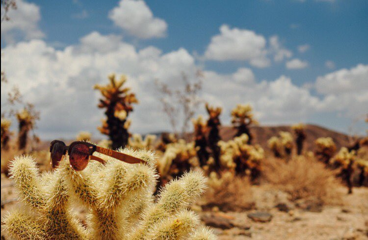 Want to know what bamboo & repurposed materials has to do with our SOLO shades? Go to the link in our bio