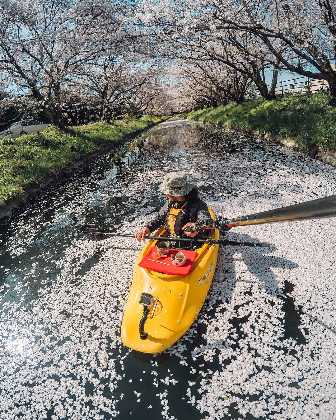 "Taking off for #Japan on #TravelTuesday! It's #GoldenWeek and the last of the #CherryBlossoms are falling. Adventurer @akira.tanaka.canyoneer caught this shot as part of his ""Extreme Tea Party"" series. Head over to @goprojp to see all the other gnarly..."