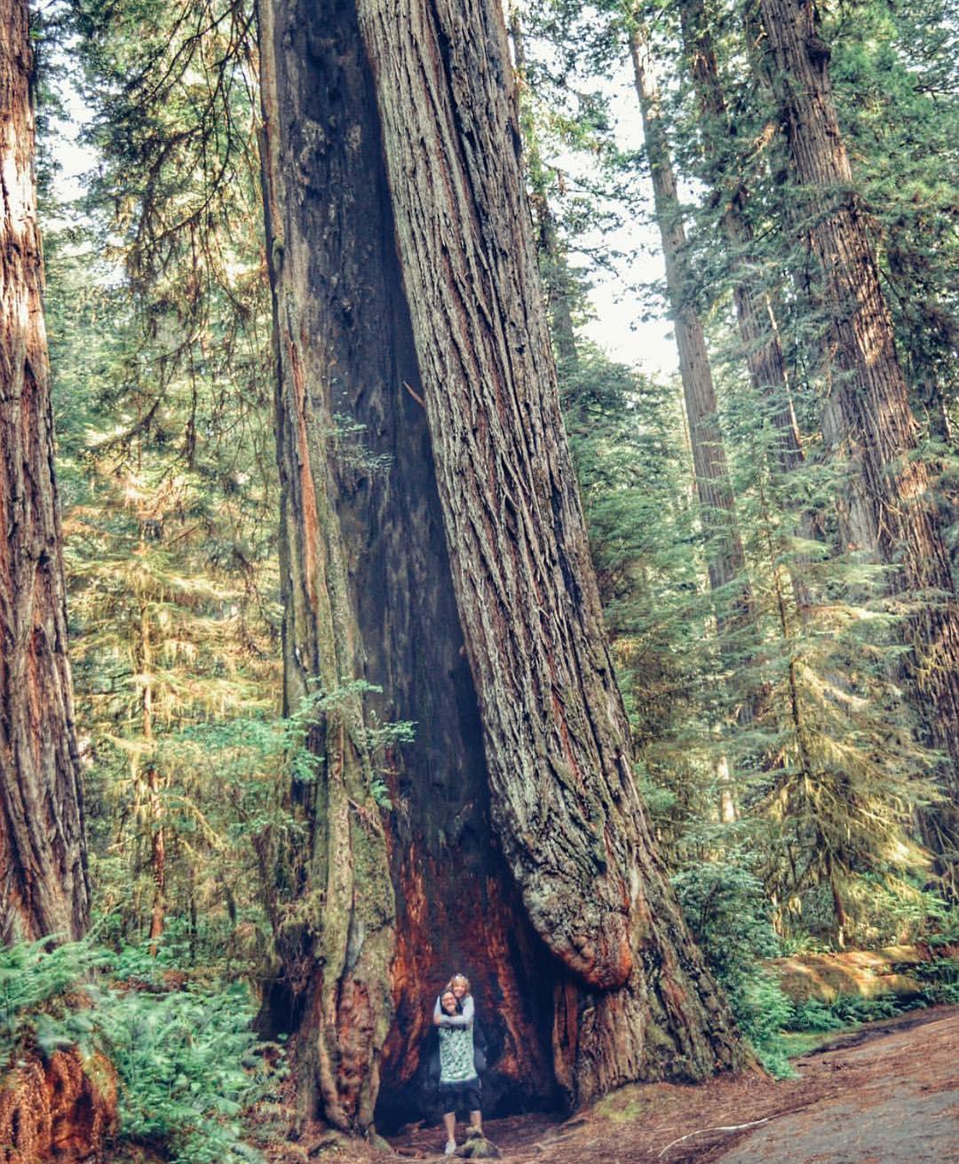 SheJumps ambassador @jazzfitz exploring the California Redwoods on her road trip. #iamsj #SheJumps #redwoods #california #trees #explore #getoutthere #getoutside #optoutside