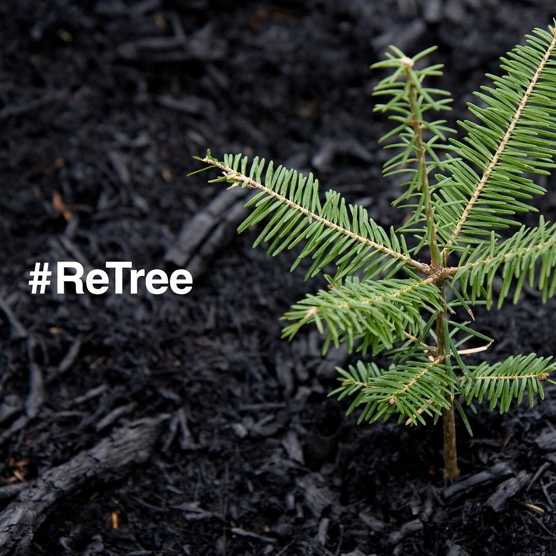 Let's do more for the planet...Together! Help @boxedwater reach their goal of planting 200,000 trees through the ReTree program. For every #ReTree tag, they'll plant two trees with @nationalforests. Learn more: boxedwaterisbetter.com.