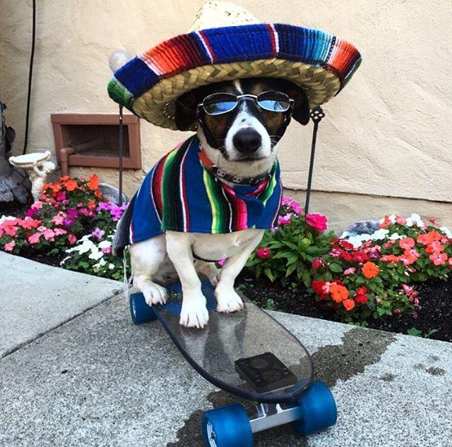 Happy cerveza mas fina tequila enchilada day