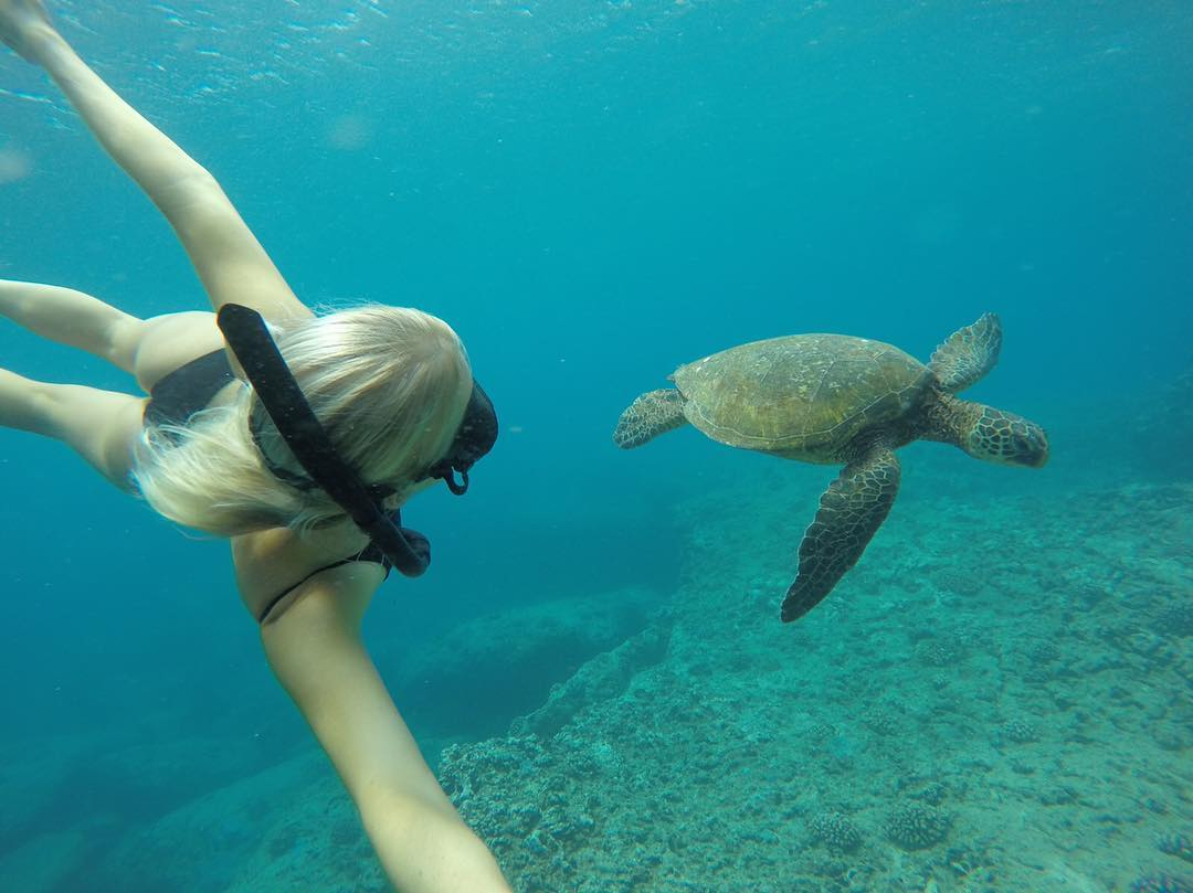 GoPro Featured Photographer + #GoProGirl @brinkleydavies  About the Shot: As a Marine Biologist, I love all ocean life especially  the Hawaiian Green Sea Turtle or Honu, as known in Hawaii. They are a protected species, but they are definitely not...