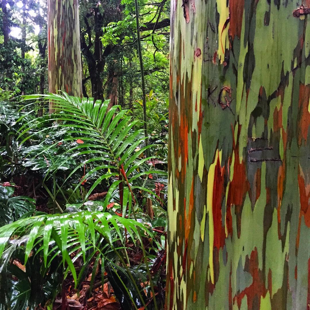 Nature is crazy beautiful! #roadtohana #maui #hawaii #wanderlust #aloha